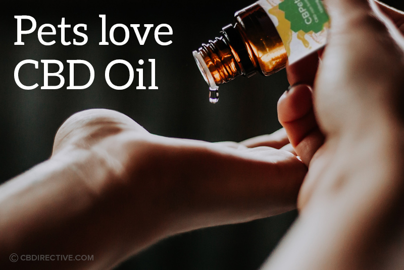 CBDirective-Article-03-pets-love-cbd-oil-cbpets